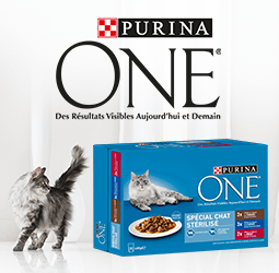 /deal/1882-purina-one-r-chat-1